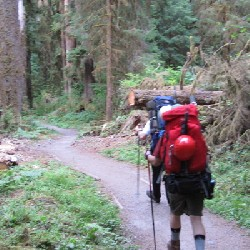 Start of the Hoh River Trail