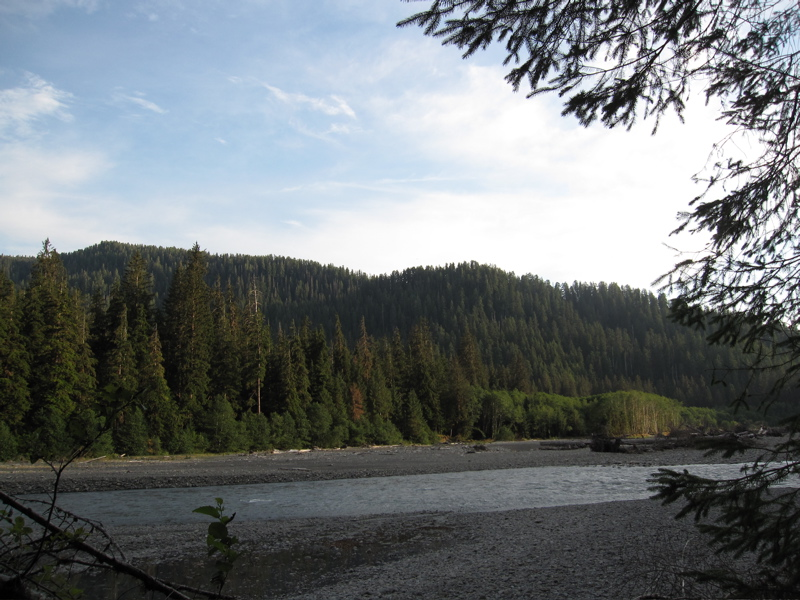 Hoh River Evening