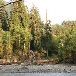 Hoh River Gravel Bars