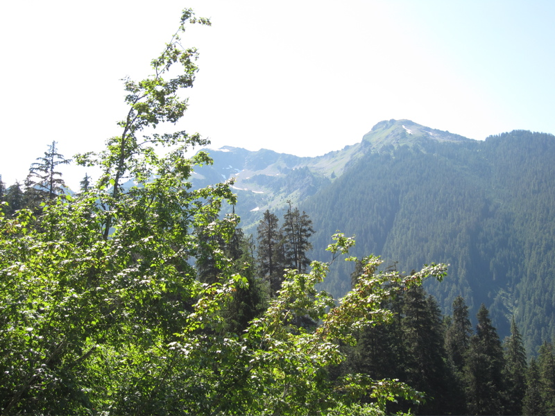 Western Ridge of Hoh River Valley