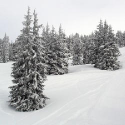 Powder Fields